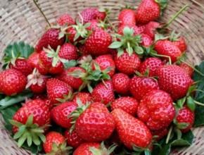15 290x220 - 7 причини да обичате ягоди