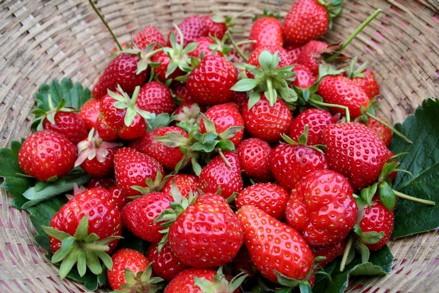 15 - 7 причини да обичате ягоди
