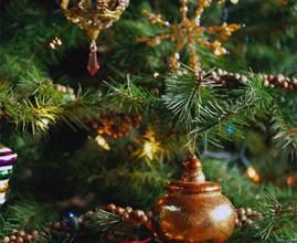 elha 269x220 - Коледната елха: от класика до елегантност