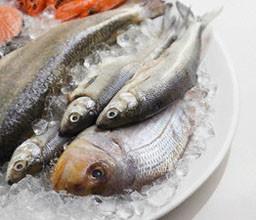 riba 256x220 - За ползите от морската риба