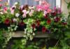 4 идеи за красива лятна тераса