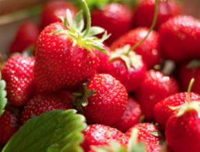 01iagodi 290x220 - За ягодите...