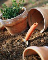 Подготовка на стайните растения за лятото