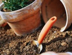 01rl 290x220 - Подготовка на стайните растения за лятото