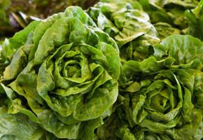 01listni salati 290x200 - Какво да ядете през зимата
