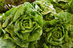 01listni salati - Какво да ядете през зимата