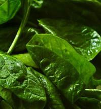 spinach 199x215 - 8 пролетни рецепти за основни ястия