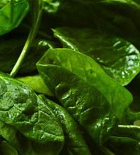 spinach 199x220 - 8 пролетни рецепти за основни ястия