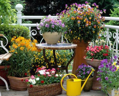 Spring containers with Viola cornuta, Bellis perennis, Viola wittrockiana and Erysimum
