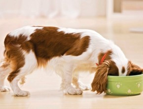 hranene kucheta 290x220 - Правилно хранене на кучетата. Как да го постигнем?
